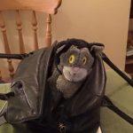 A Mog the Cat toy in a handbag